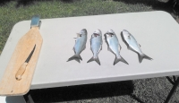 Jax Beach - Surf Fishing Report - Aug 24 2014